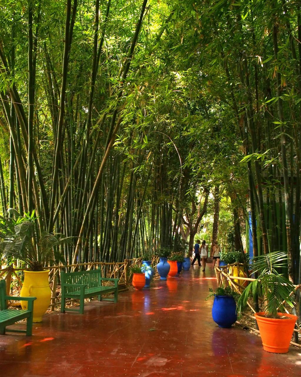 Jardin Majorelle walk