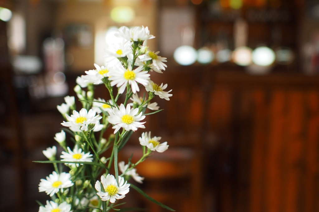 2014-07_daisies