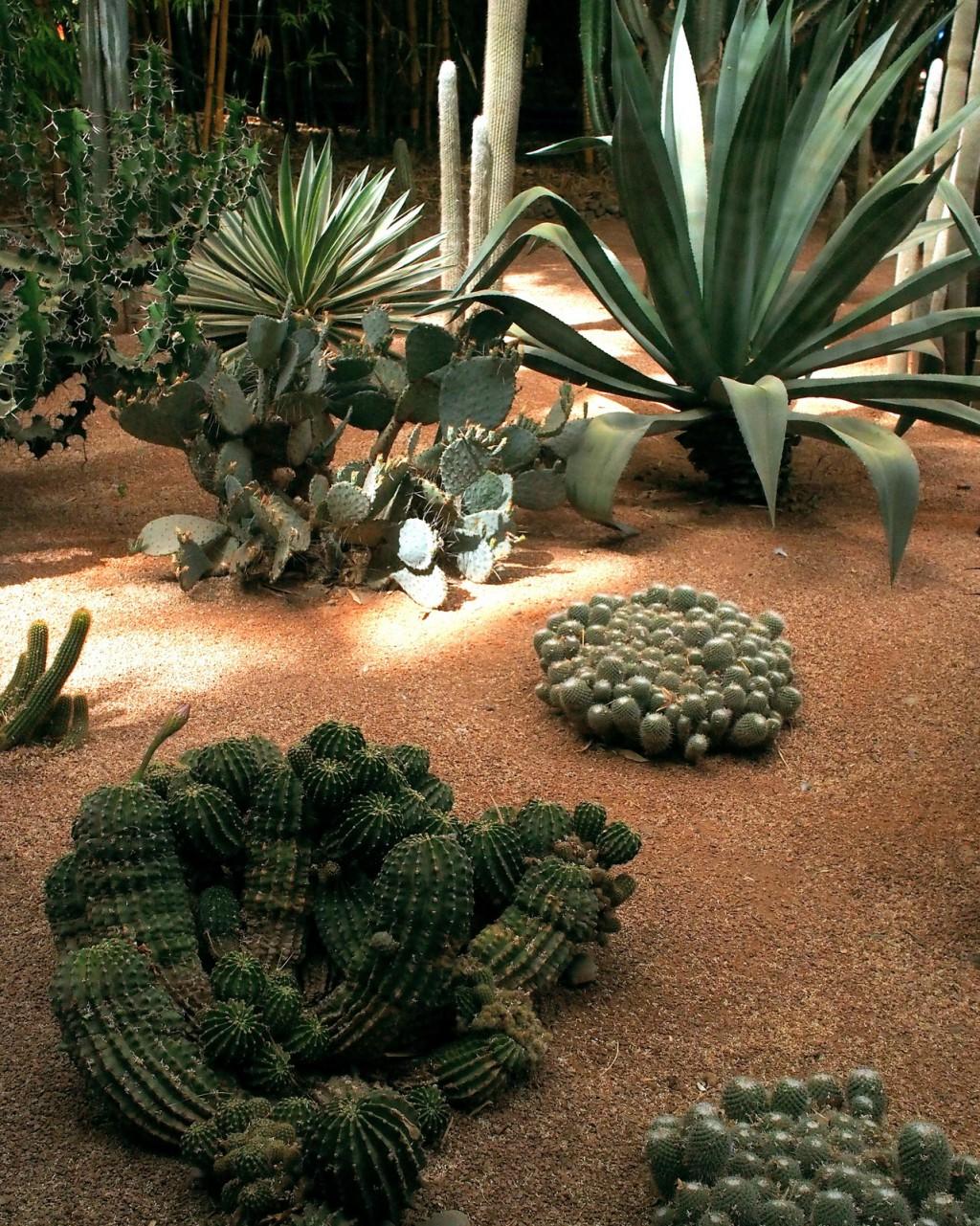 Jardin Majorelle cacti (2)