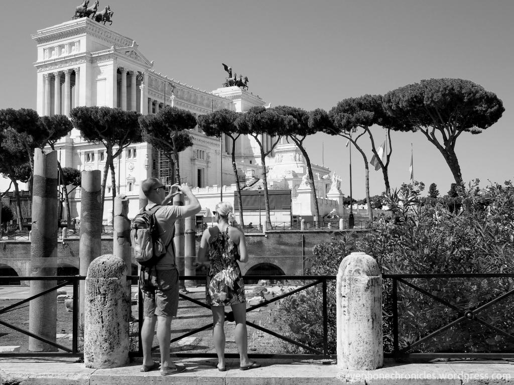Rome trees (3)