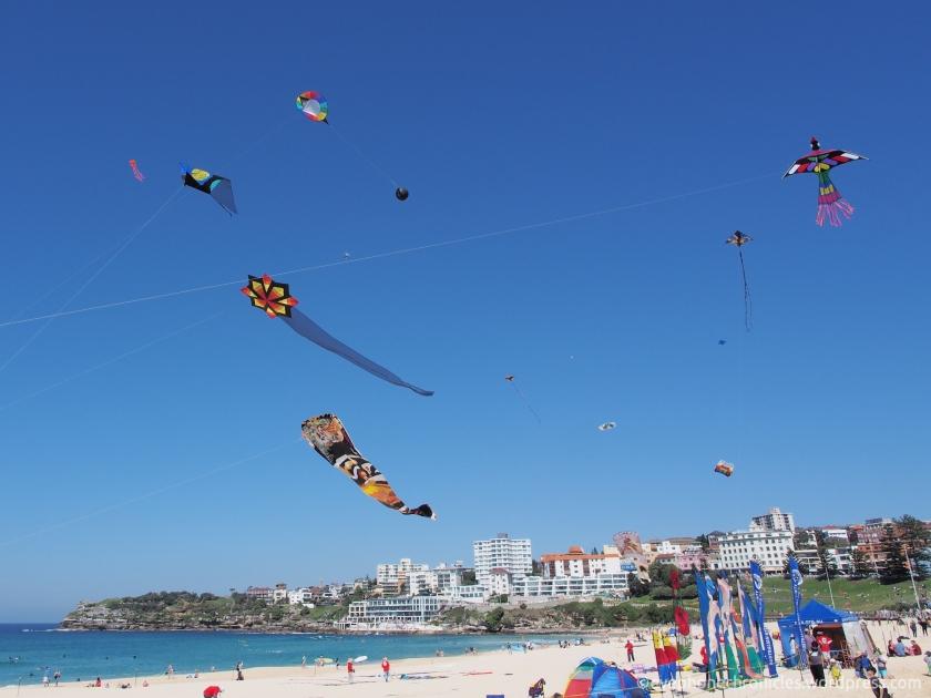 Festival of the Winds-Bondi (2)