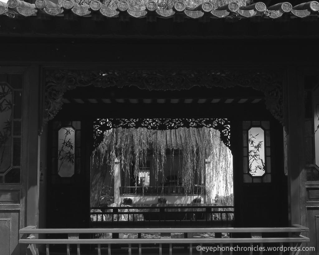 Sydney Chinese Garden (3)