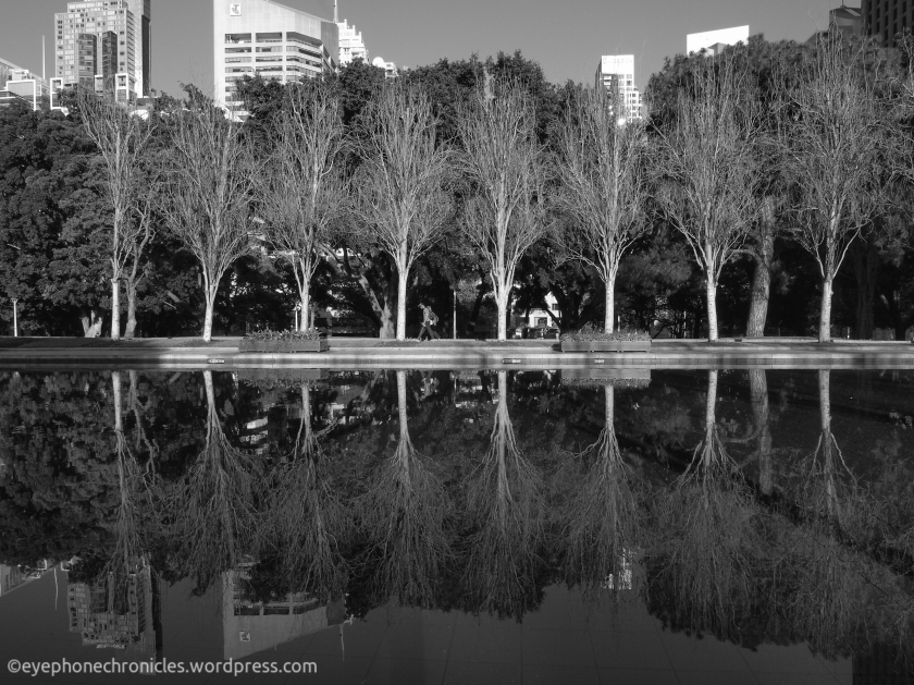 Hyde Park reflections (1)